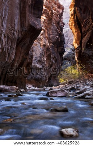 Zion National Park's Virgin Narrows at autumn, one of the most unique and beautiful hikes in the United States.