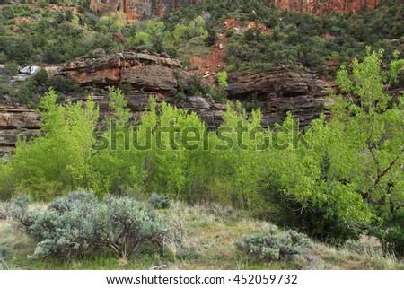 Zion National Park, sandstone   - stock photo