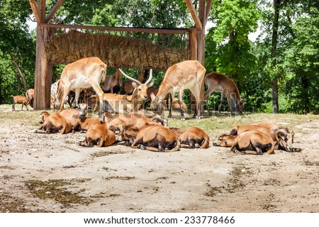 Zoo. herd of antelopes on  a background of green forest - stock photo