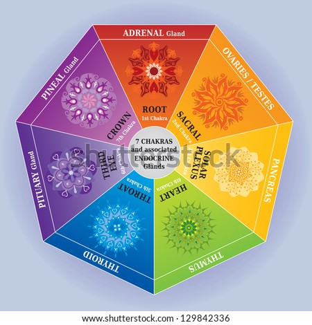 7 Chakras Color Chart with Mandalas and Endocrine Glands - stock vector