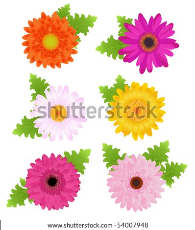 6 Colorful Daisies (Orange, Pink, Magenta, Yellow) With Leaves, Isolated On White - stock vector