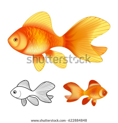 3d vector illustration and ink drawing of goldfish isolated on white background