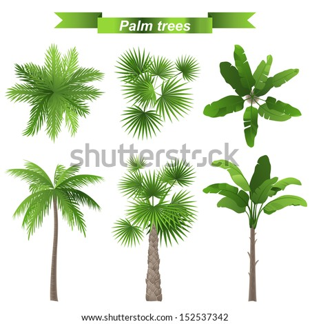 3 different palm trees - top and front view - stock vector