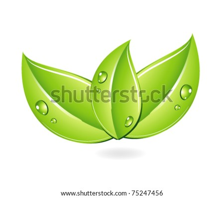 drops on the green leafs isolated - stock vector
