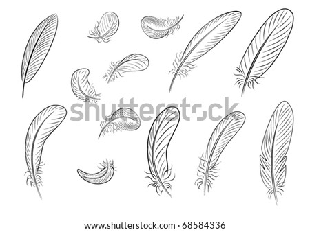 Feathers, painted with thin black lines - stock vector