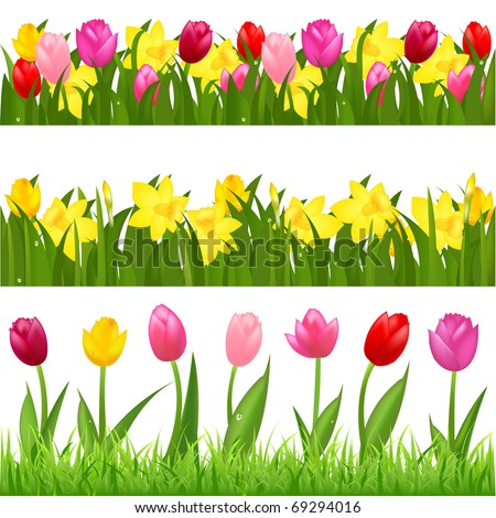 3 Flower Borders From Tulips And Narcissuses, Isolated On White Background, Vector Illustration - stock vector