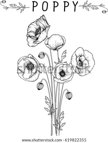 Flowers drawing poppy flower vector illustration stock photo photo flowers drawing poppy flower vector illustration and line art mightylinksfo Image collections
