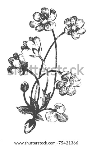 Flowers.Hand-drawn illustrations - stock vector