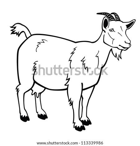 goat black and white v...