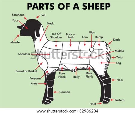 4h Parts Sheep Stock V...