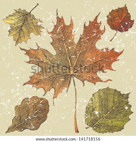 5 hand drawn autumn leaves - stock vector