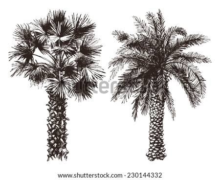 2 hand drawn palm trees in retro style - stock vector