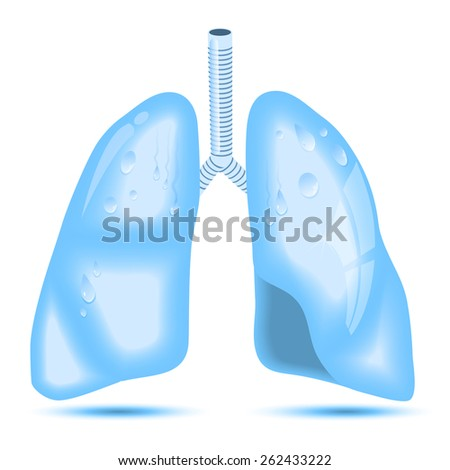 human lungs. A concept for healthy lungs. Lungs as crystal clear water - stock vector