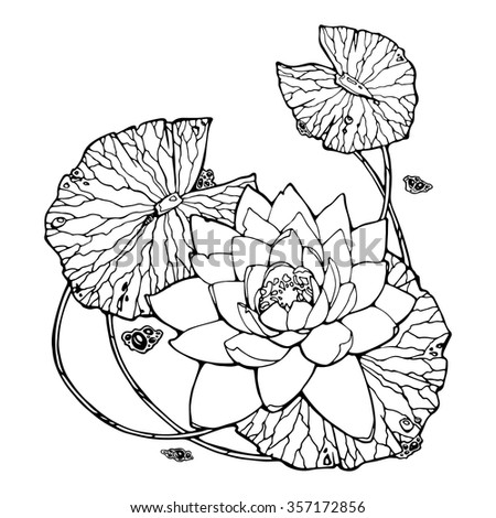 illustration of water lily; lotus; feng shui symbol