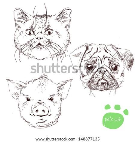 Dead Pig Head Drawing