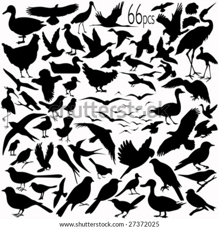 66 pieces of detailed vectoral bird silhouettes. - stock vector