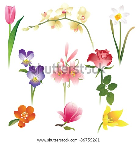 9 realistic flowers icons - stock vector