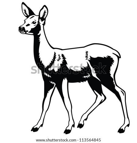 Deer illustration black and white - photo#36