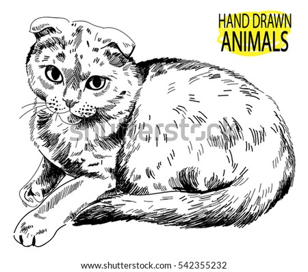 Scottish Fold. The cat is lying. Vector freehand drawing.