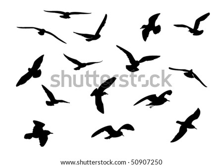 14 seagull silhouette - stock vector