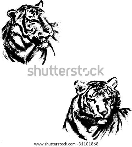 tigers - stock vector