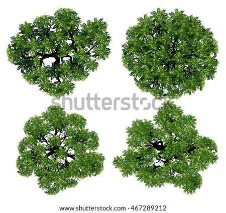 tree top view from realistic.Trees top view for landscape vector,Tree Branch Silhouettes,tree top view design for map,tree from the top,Trees top view for houses map,Trees top view for city plan