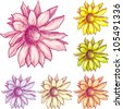6 types of colored tender decorative flowers. Vector flower set - stock vector