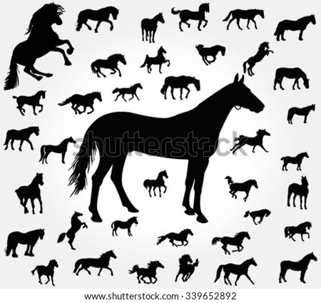 Vector silhouettes of horses. Big set.