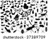 100 vector silhouettes of insects (butterflies, bugs, flies, bees ets.) - stock vector
