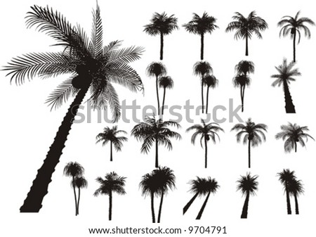 20 vector tropical palms and trees - stock vector