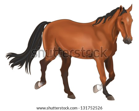 A beautiful horse isolated in white background - stock vector