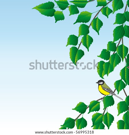 A blue titmouse sits on a birch branch