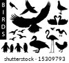 A collection of bird silhouettes-Check out my portfolio for other collections. - stock vector