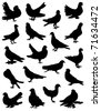 A collection of pigeons - stock vector