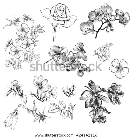 A collection of vector high detailed flowers for design in engraved style - stock vector