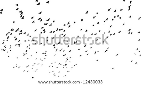 a flock of birds flying off; black and white vector illustration - stock vector