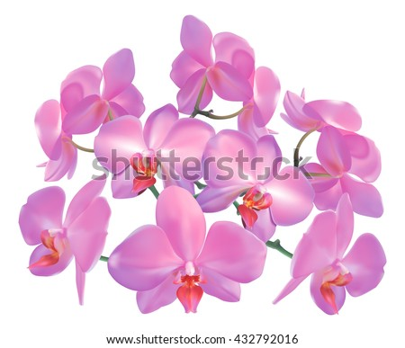 A floral illustration of purple pink orchid flowers