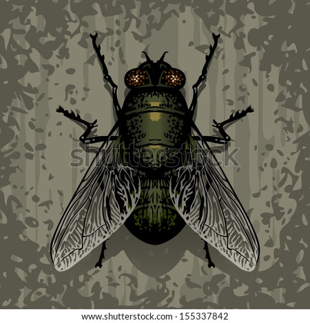 A fly on textured surface. Vector illustration. - stock vector