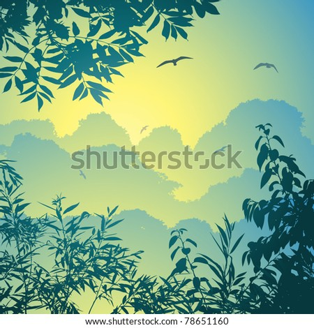 A Forest Landscape with Trees and Leaves