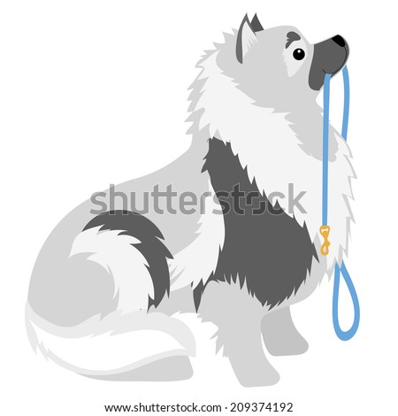 A Keeshond sitting with a leash in its mouth waiting to go for a walk - stock vector