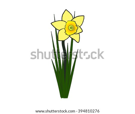a lonely daffodil - stock vector