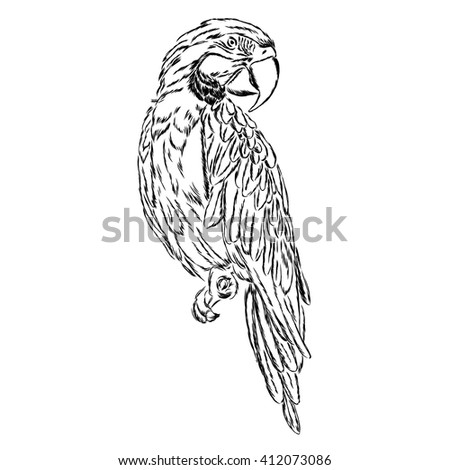A parrot. Vector illustration.