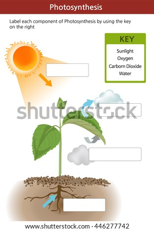 Photosynthesis Stock Images, Royalty-Free Images & Vectors ...