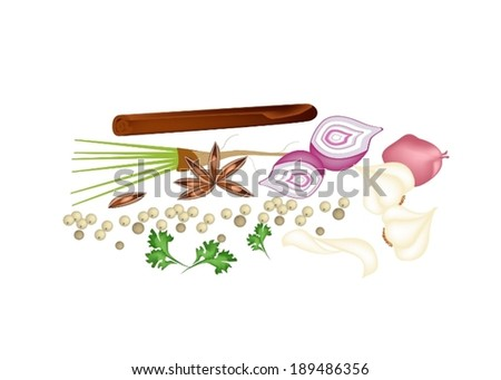 A Pile of Chinese Spices, Dried Star Anise, Cinnamon Sticks, Dry Peppercorns, Garlic and Coriander Used for Seasoning in Cooking.  - stock vector