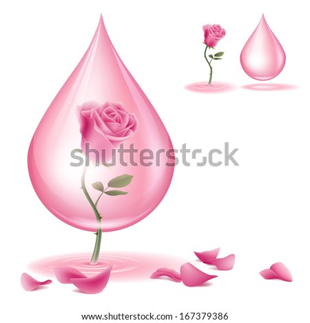 A pink rose and  rose oil. Dripping of rose essential oil.  File contains transparencies and Gradient Mesh. File is layered with global colors. - stock vector