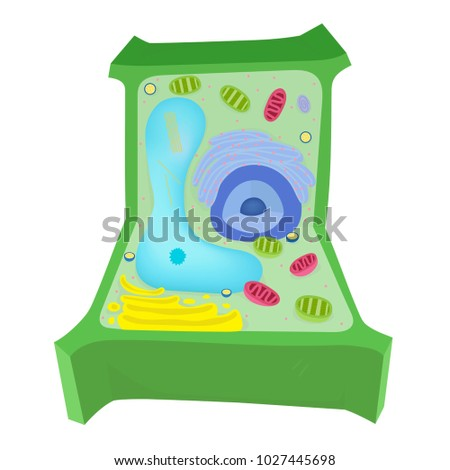 Plant Cell Diagram Stock Photo Photo Vector Illustration