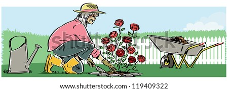 A retired woman planting roses. The Woman, roses, water can and wheelbarrow, can easily be separated from the background and used without the background if needed. - stock vector
