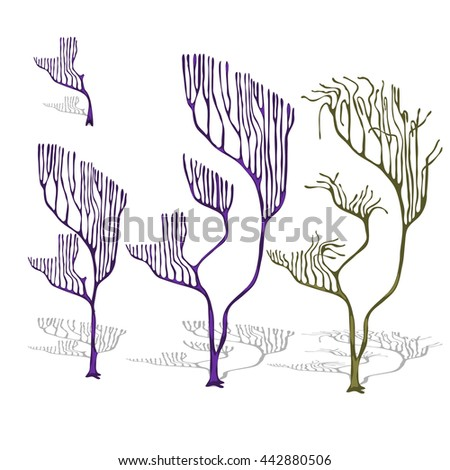 A set of coral isolated on white background. Vector illustration. - stock vector