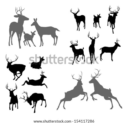 A set of deer silhouettes including fawn, doe bucks and stags in various poses. Also a family group pose and two stags fighting - stock vector