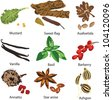 a set of different spices on a white background - stock vector